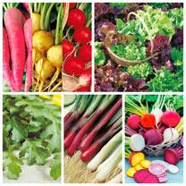 Image of Salad & Seed Box