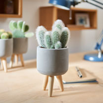 Cactus in Ceramic