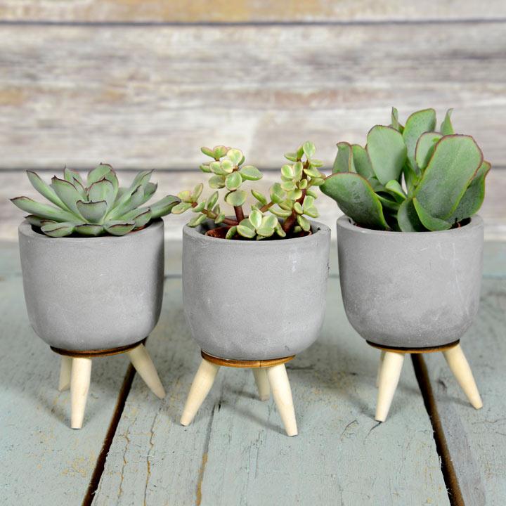 Succulents in Ceramic