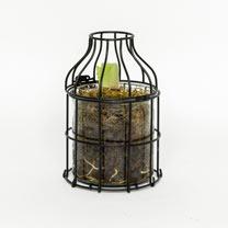 Amaryllis Bulb in Metal Planter