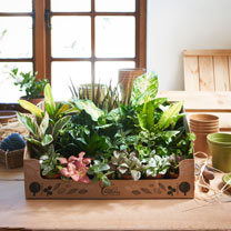 Box of Plants x 24
