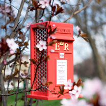 Click to view product details and reviews for Postbox Peanut Bird Feeder.