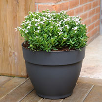 Ninfea Water Reservoir Planter (30cm - Anthracite)