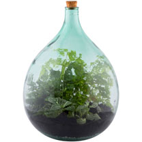 Terrarium Bottle 35L