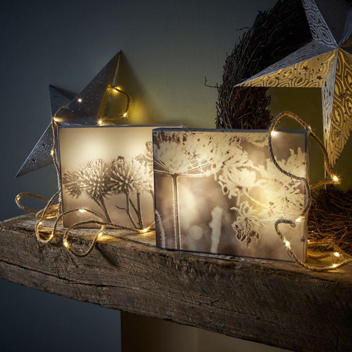 Decorative LED Canvas - Cow Parsley