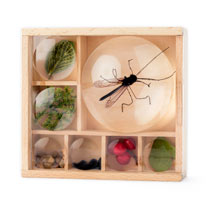 Bug Box & Magnifier
