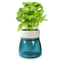 Self Watering Herb Pot - Blue