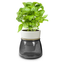 Self Watering Herb Pot - Grey