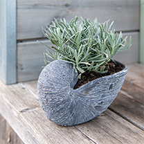 Grey Shell Flower Pot
