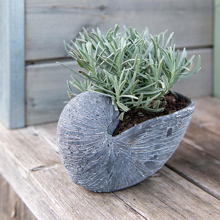 Grey Shell Flower Pot
