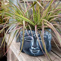 Buddha Flower Pot Dark Grey