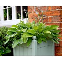 "Classic Planter - 15"" Heritage Sage"