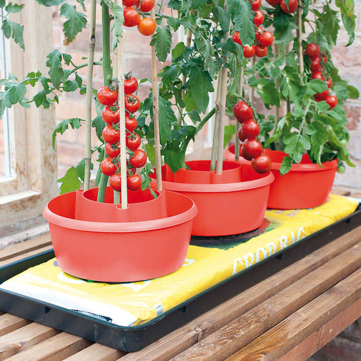 Plant Halos - Red (Pack of 3)