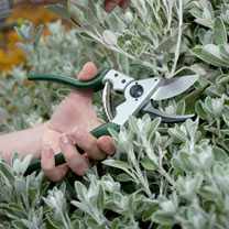 Kew Ergo Bypass Secateurs