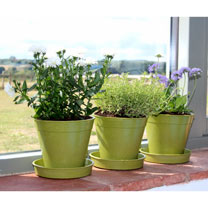 Image of 5 Bamboo Pot and Saucer - Sage Green (5 Pack)