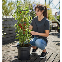Tomato Pot 33cm (Buy 3 get a 4th FREE)