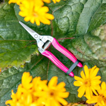 FloraBrite™ Bypass Harvesting Snip - Pink
