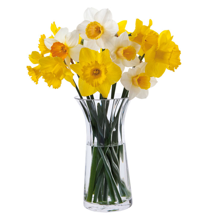 Daffodil Vase