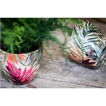 Tropical Planters - 16cm Tango