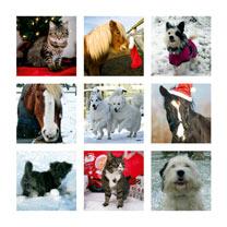 Festive Friends Christmas Cards