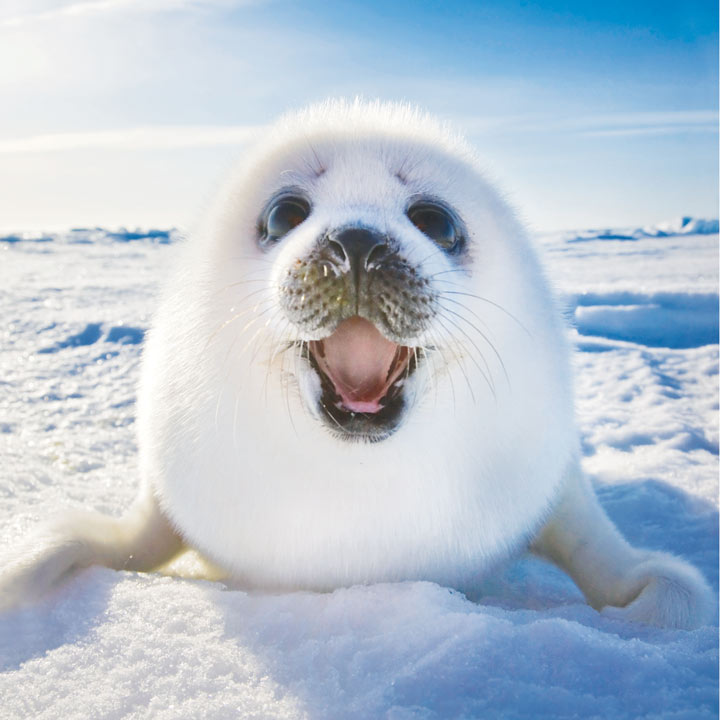 Smiling Seal Christmas Cards Greetings Cards Charity