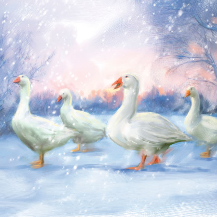 Snow Geese Cards