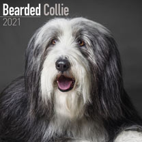 Dog Breed Calendar - Bearded Collie