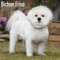 Dog Breed Calendar - Bichon Frise