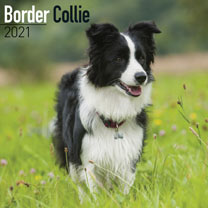 Dog Breed Calendar - Border Collie