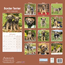 Dog Breed Calendar - Border Terrier