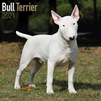 Dog Breed Calendar - Bull Terrier