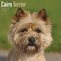 Dog Breed Calendar - Cairn Terrier