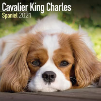 Dog Breed Calendar - Cavalier King Charles Spaniel