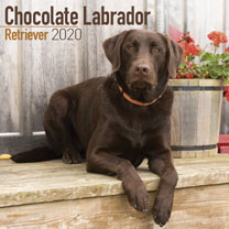 Dog Breed Calendar - Chocolate Labrador Retriever