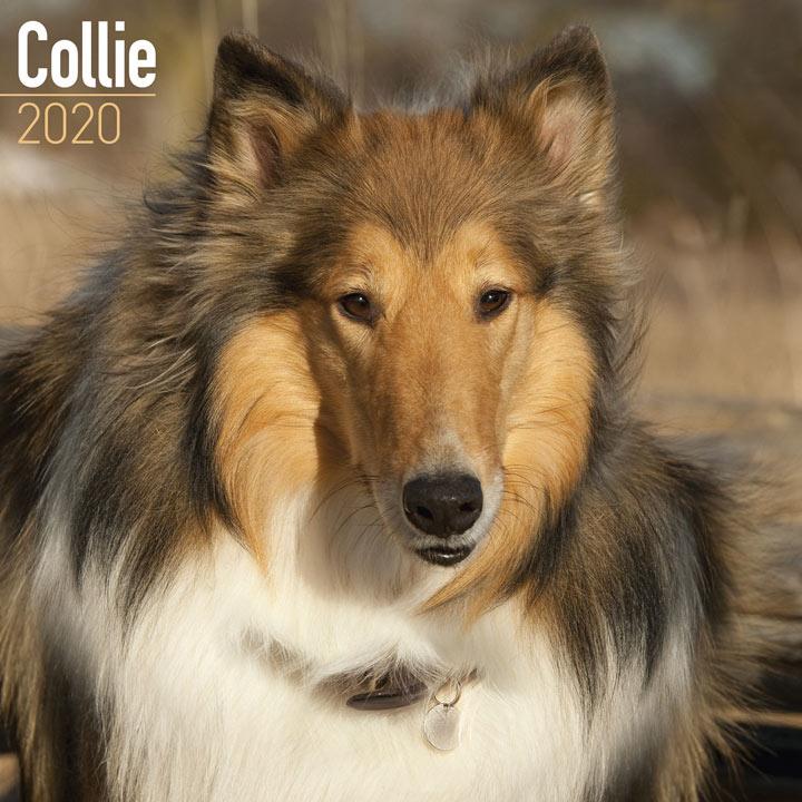 Dog Breed Calendar - Collie