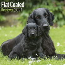 Dog Breed Calendar - Flat Coated Retriever