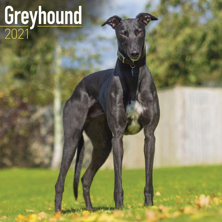 Dog Breed Calendar - Greyhound