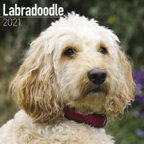 Dog Breed Calendar - Labradoodle