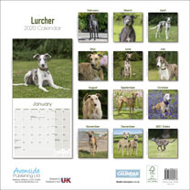 Dog Breed Calendar - Lurcher