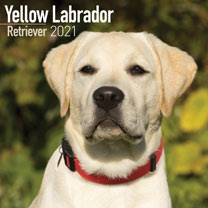 Dog Breed Calendar - Yellow Labrador Retriever