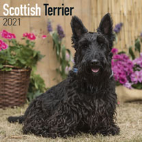 Dog Breed Calendar - Scottish Terrier