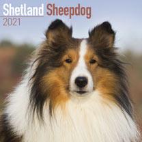 Dog Breed Calendar - Shetland Sheepdog