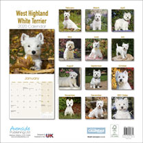 Dog Breed Calendar - West Highland White Terrier