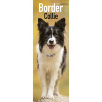 Slimline Calendar - Border Collie