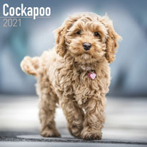 Dog Breed Calendar - Cockapoo