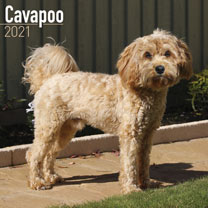 Dog Breed Calendar - Cavapoo