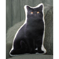 Cushion - Black Cat 49 x 35cm
