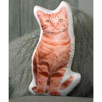 Cushion - Ginger Cat 50 x 26cm