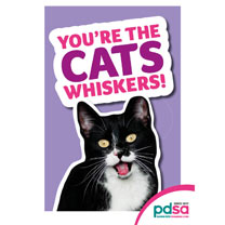 'You're the Cats Whiskers'