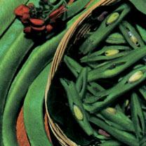 Runner Bean (Organic) Seeds - Scarlet Emperor